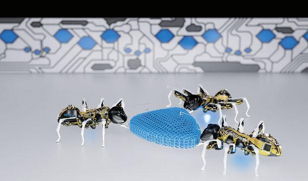 مورچه های رباتیک با هم همکاری می نمایند