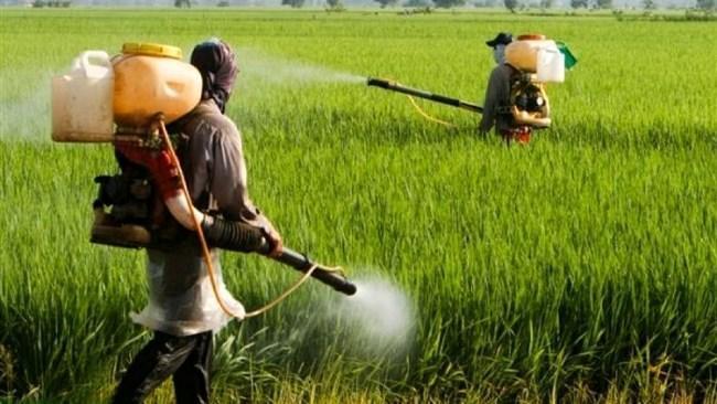 اختلال در فرایند فراوری و واردات سموم کشاورزی سریعا برطرف گردد