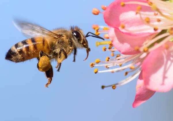 زنبورها آزمون ریاضی حل می نمایند